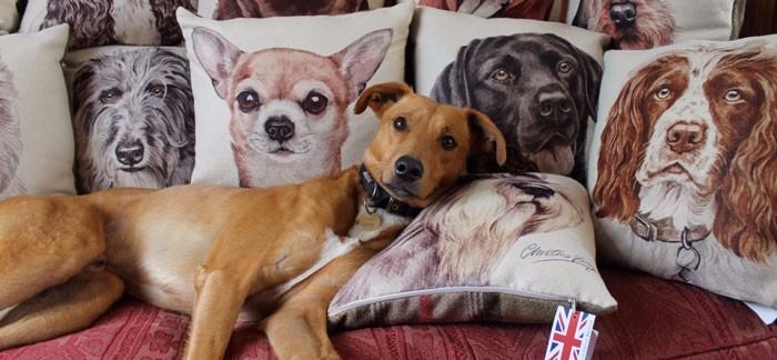 Cushions on the Sofa