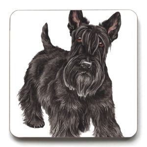 Scottish Terrier