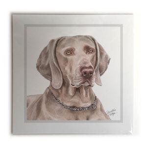 Weimaraner Dog Picture / Print