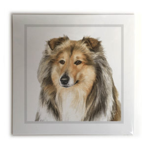 Rough Collie Dog Picture / Print