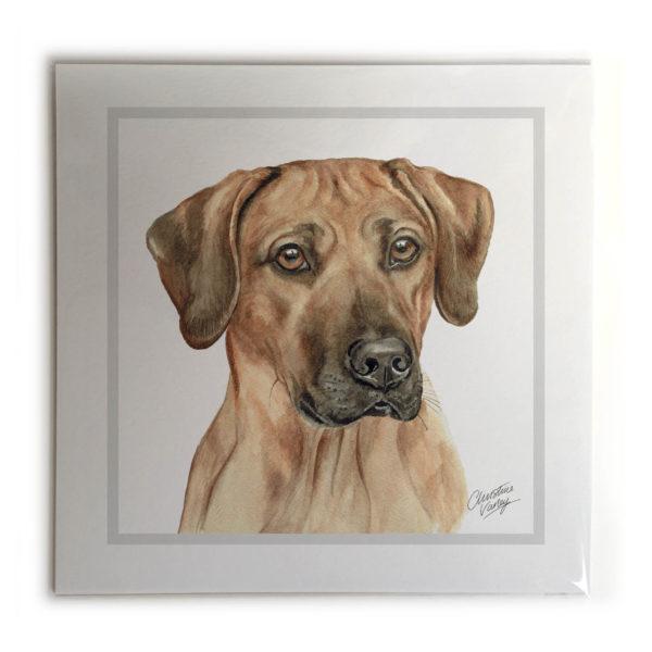 Rhodesian Ridgeback Dog Picture / Print