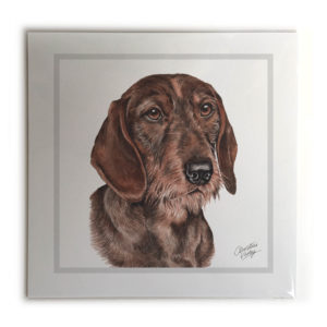 Wire Haired Dachshund Dog Picture / Print
