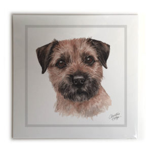 Border Terrier Dog Picture / Print