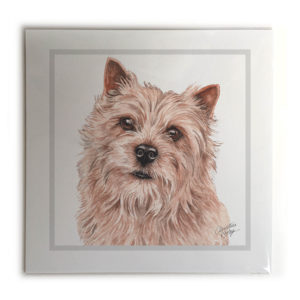Norwich Terrier Dog Picture / Print