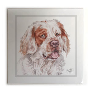 Clumber Spaniel Dog Picture / Print