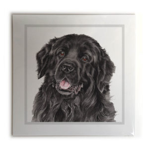 Newfoundland Dog Picture / Print