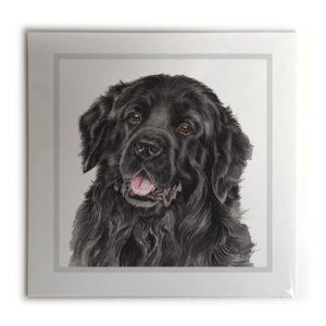 Newfoundland Dog Picture / Print