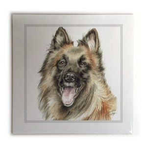 Belgian Shepherd Dog Picture / Print