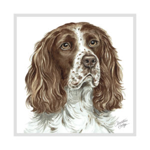 Springer Spaniel Dog Picture / Print