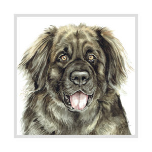 Leonberger Dog Picture / Print