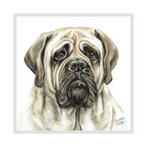 English Bull Mastiff Dog Picture / Print