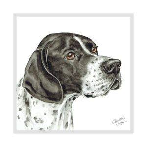 English Pointer Dog Picture / Print
