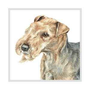 Lakeland Terrier Dog Picture / Print