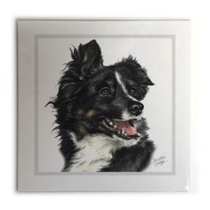 Border Collie Dog Picture / Print