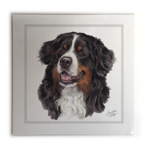 Bernese Mountain Dog Dog Picture / Print