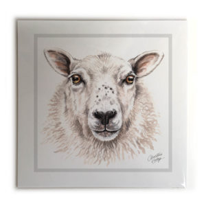 Sheep Animal Picture / Print