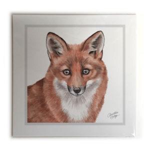 Fox Animal Picture / Print